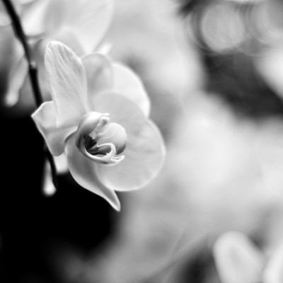 Three Methods for Toning Black & White Images in Photoshop